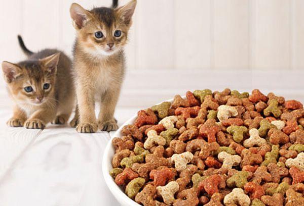 Как переводить котенка на сухой корм
