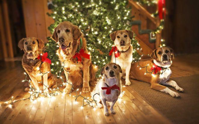 Как встречать Новый 2018 год желтой собаки?
