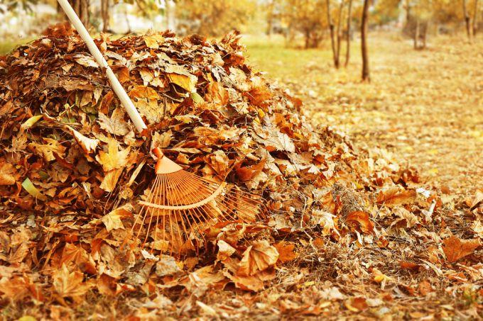 Как собрать и использовать в саду опавшие листья