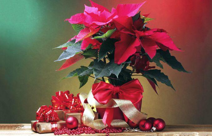 Три растения, которые можно поставить вместо елки на Новый год