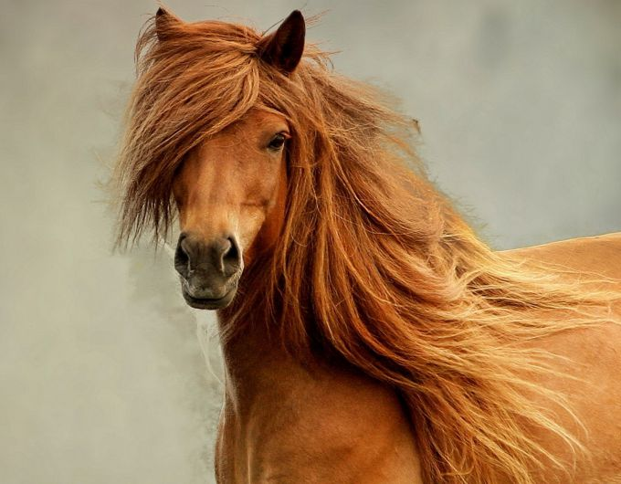 What distinguishes shampoo for horses from conventional