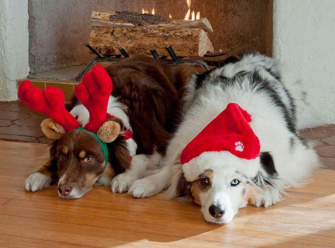 Как порадовать свою собаку в год Собаки
