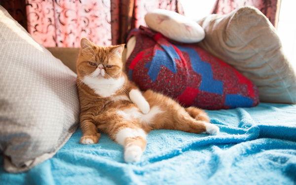 10 правил воспитания кошки