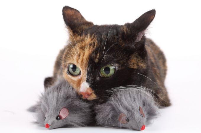 Как защитить дом от мышей на зиму