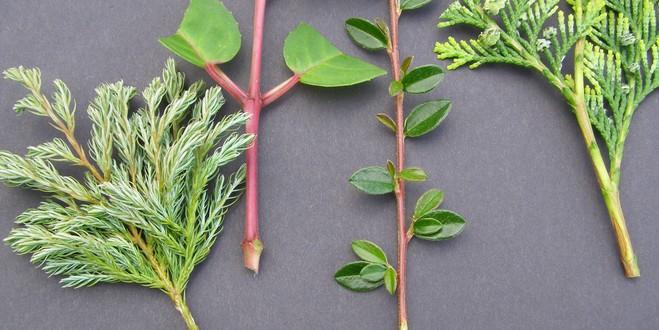 Черенкование как способ размножения растения: правила и нюансы
