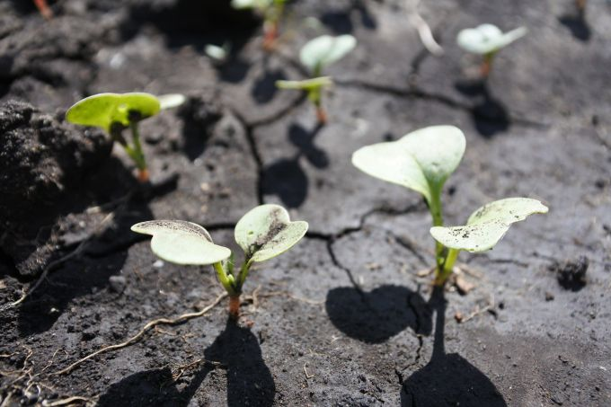 Что посадить в мае в открытый грунт