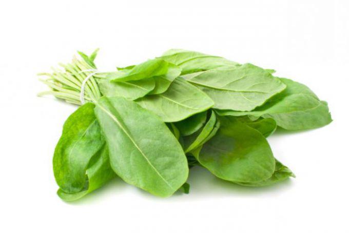 Щавелевые зеленые щи на мясном бульоне простой рецепт
