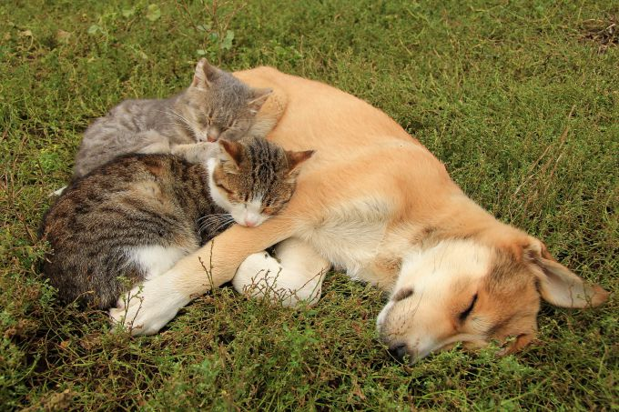 Кошки и собаки на прогулке могут подхватить клеща