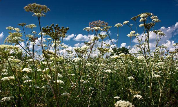 лекарственные травы июня