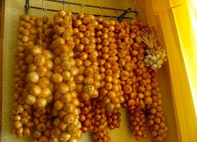 Как подготовить репчатый лук к хранению