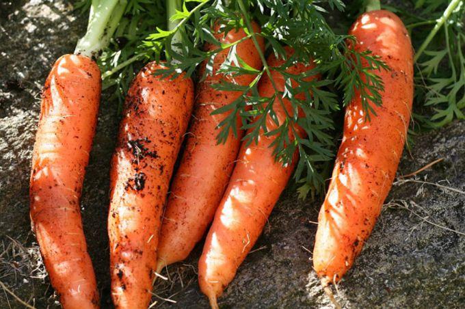 Чем подкормить морковь в августе, чтобы она была сладкая