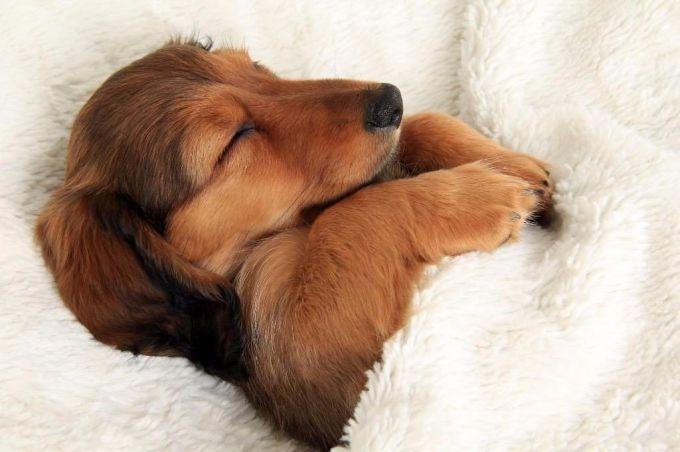 Как быстро уснуть без лекарств: народный метод