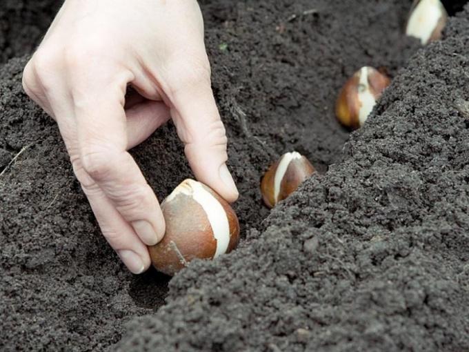 Что посадить в сентябре на огороде