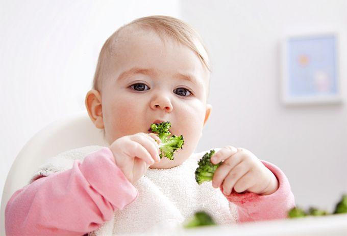 Как вводить брокколи в рацион ребенка