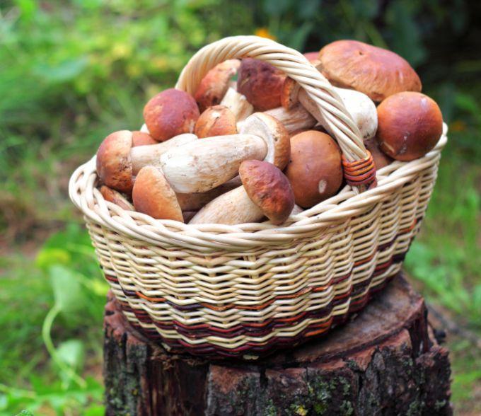 Как приготовить белые грибы на зиму