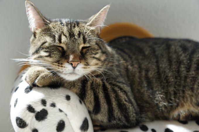 Как защитить мебель от когтей кошки