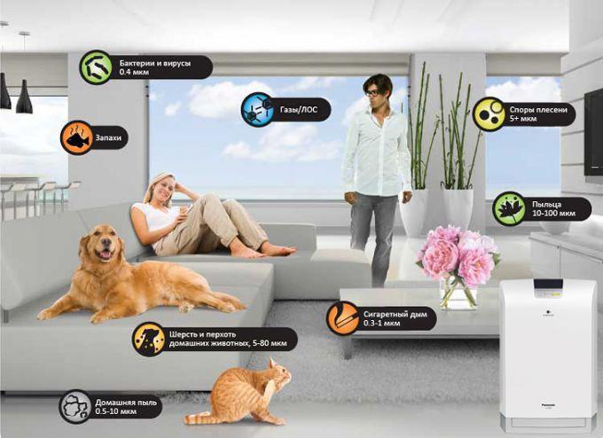 Как выявить аллерген в квартире