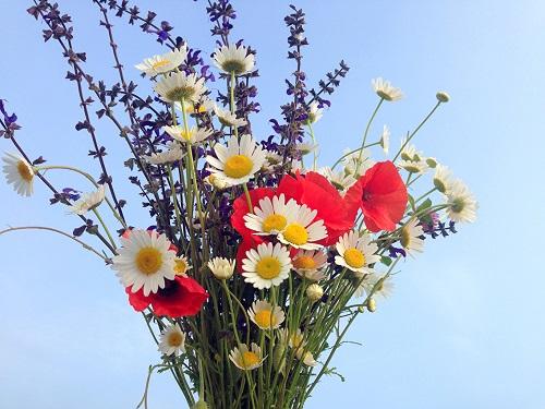 Ультра букет поиск букет полевых цветов в руках