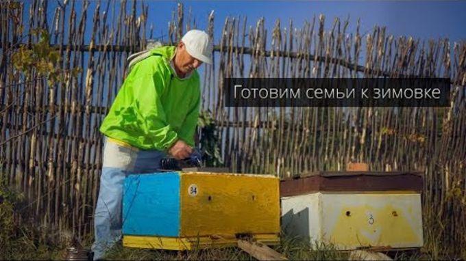 Подготовка пчелосемей к зиме