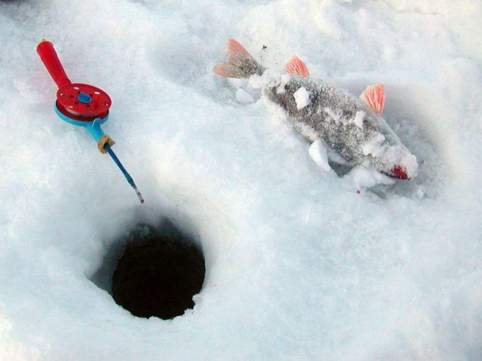 Виды кивков для зимней удочки