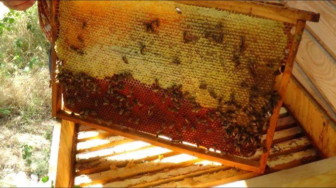 Десерты с медом: пошаговые рецепты с фото для легкого приготовления
