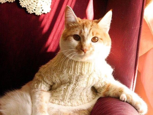 Как правильно ставить ударение в слове «пуловер»