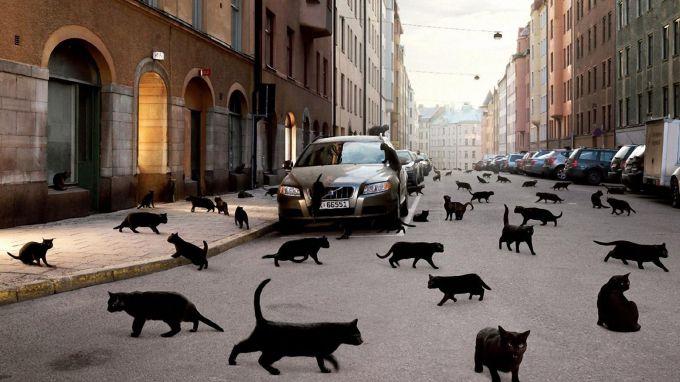 Черная кошка переходит дорогу