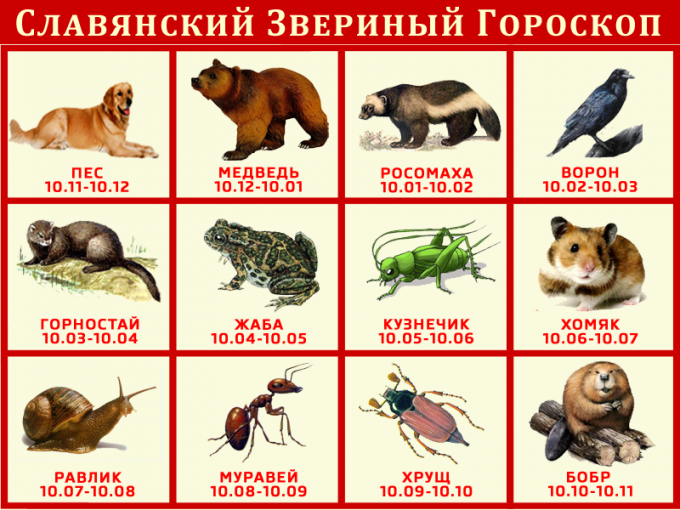 славянский гороскоп животных по дате рождения