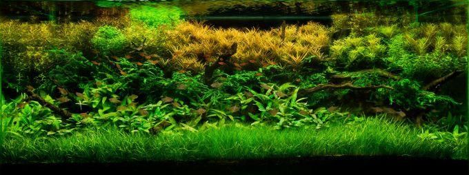 Как создать голландский аквариум