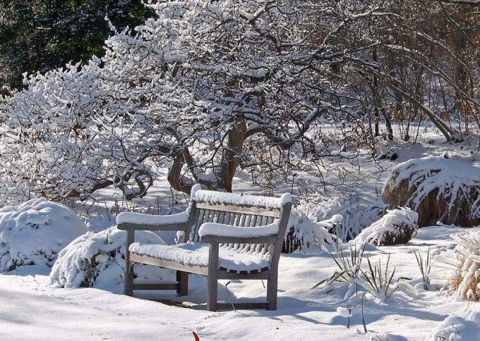 Что надо сделать в саду в начале марта