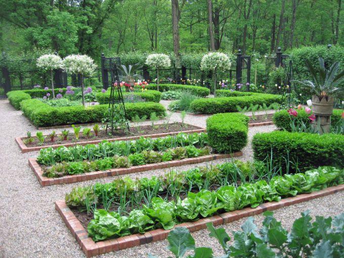 Что после чего можно сажать или севооборот на огороде