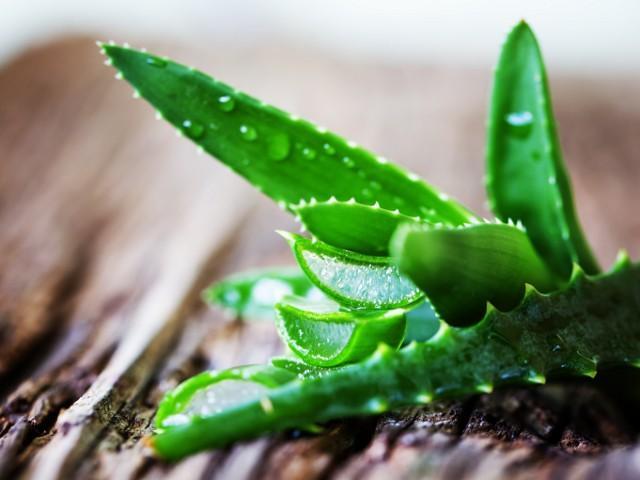 Как размножить алоэ в домашних условиях: 3 простых способа