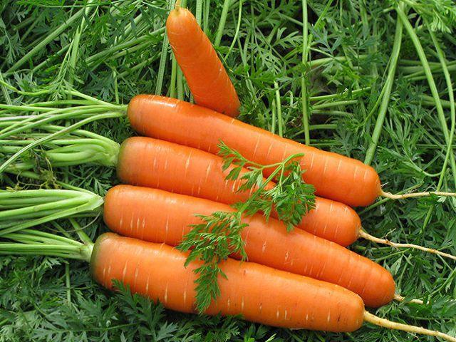 Как выбрать сорт моркови для своей почвы