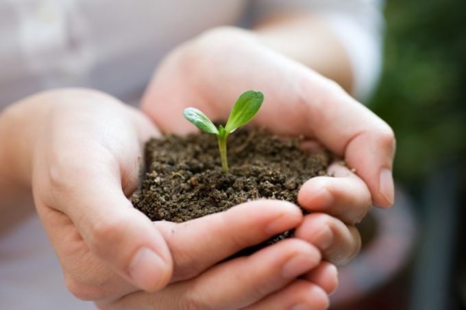 Когда высевать на рассаду семена в апреле и мае 2018 года по лунному календарю