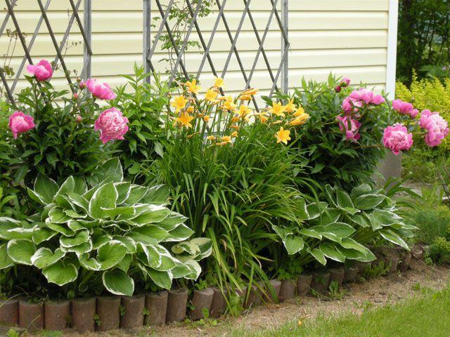 Неприхотливые многолетние цветы для сада