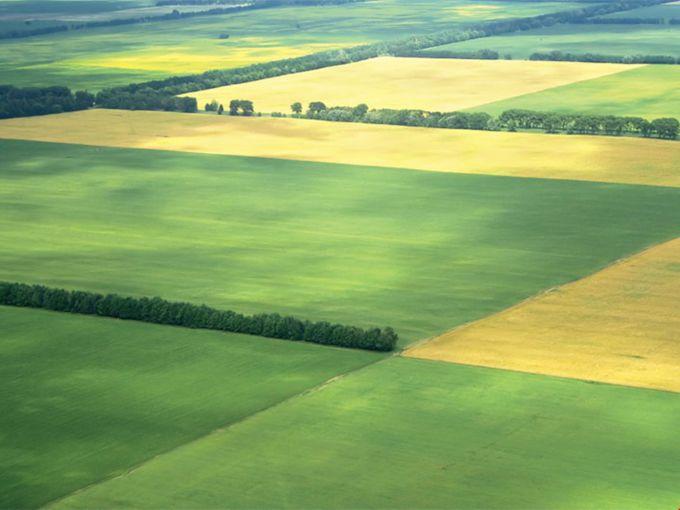 Как можно распорядиться земельным паем