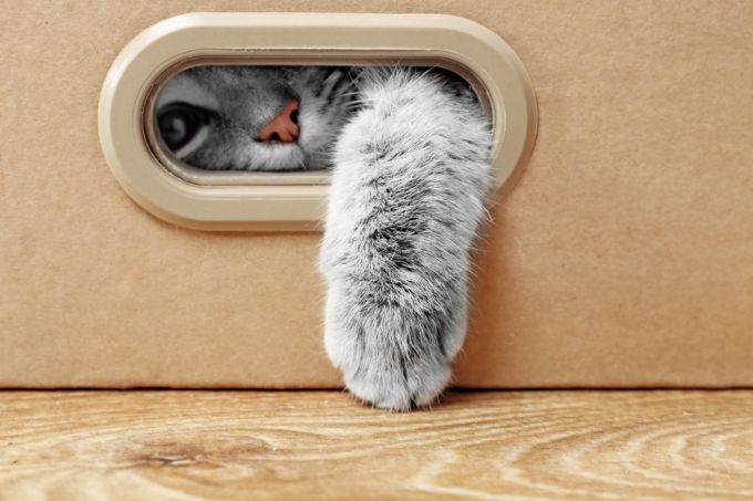 Микробы, живущие в вашей кошке