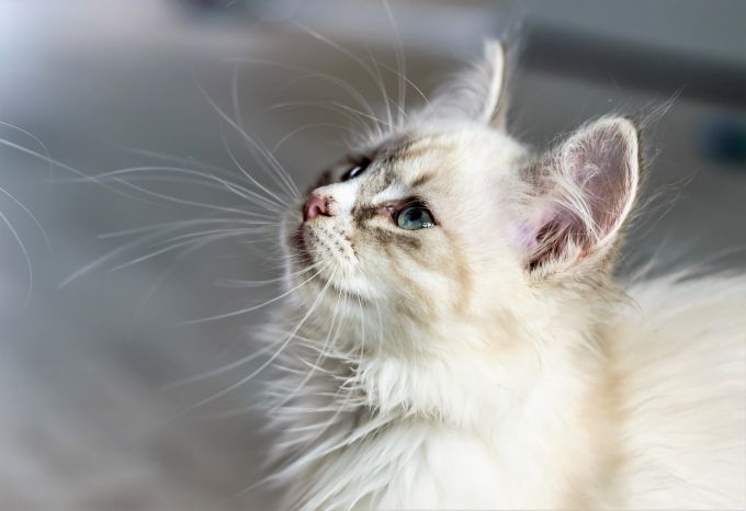 Как выбрать кошку, подходящую по образу жизни