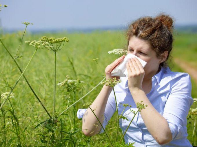 Какие полевые растения вызывают поллиноз?