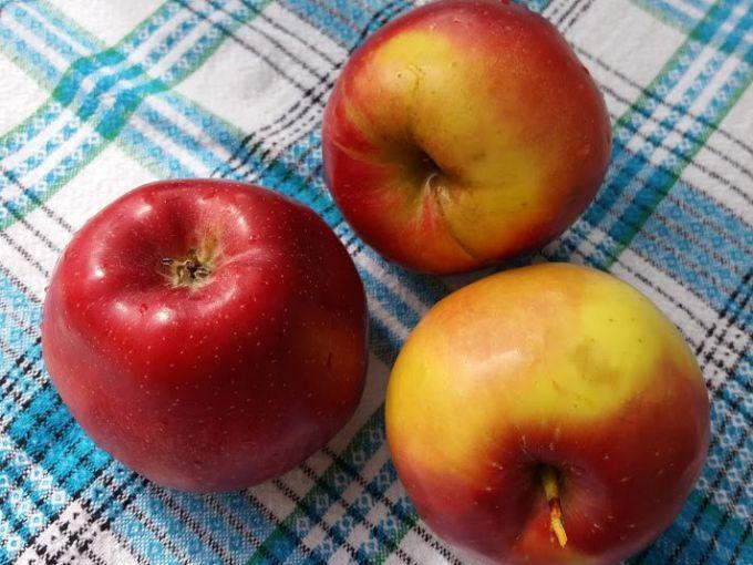 Яблоки годятся в пищу не только в сыром виде или в роли десерта