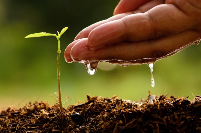 Гидрогель для растений: описание и применение