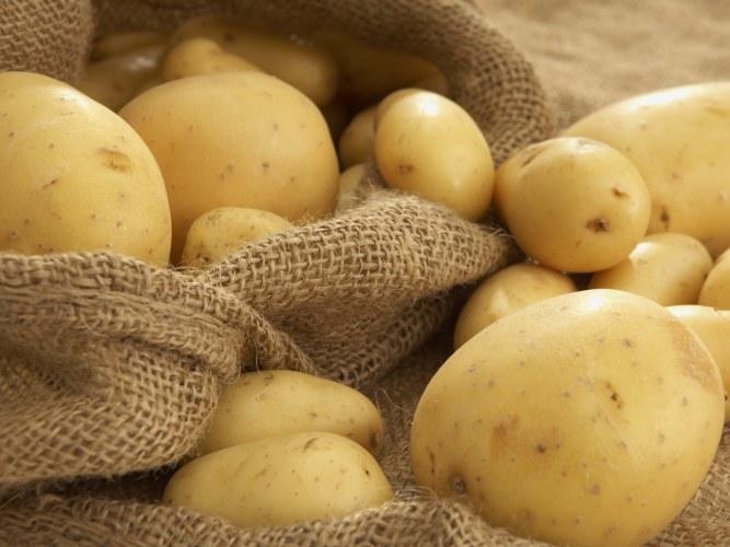 Устройство и принцип работы картофелекопалки для мотоблока