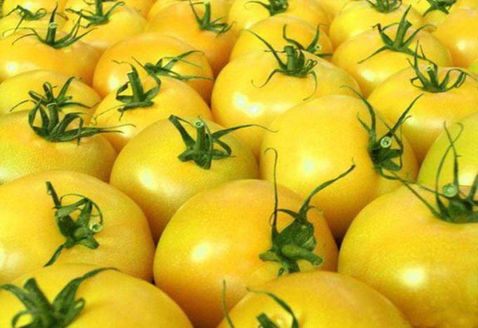 Желтоплодные томаты