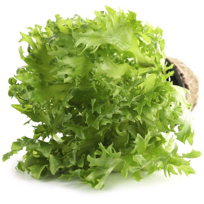 Салат фриллис: описание и особенности выращивания