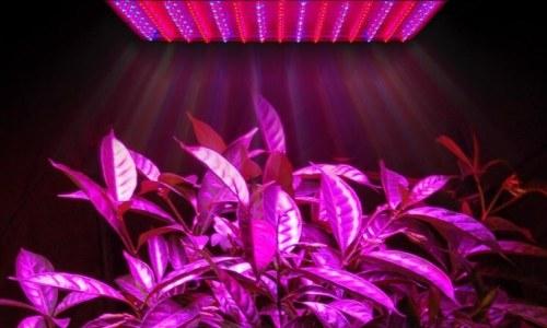 Фитосветильник для подсветки растений