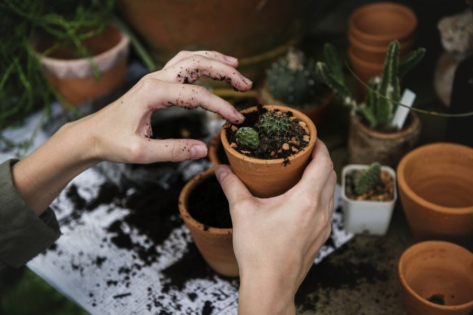 Зачем пересаживать цветы