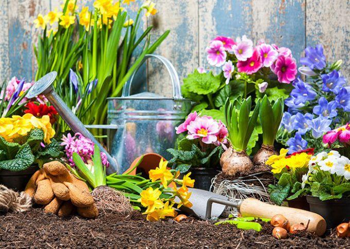 Весной цветники пестрят красками