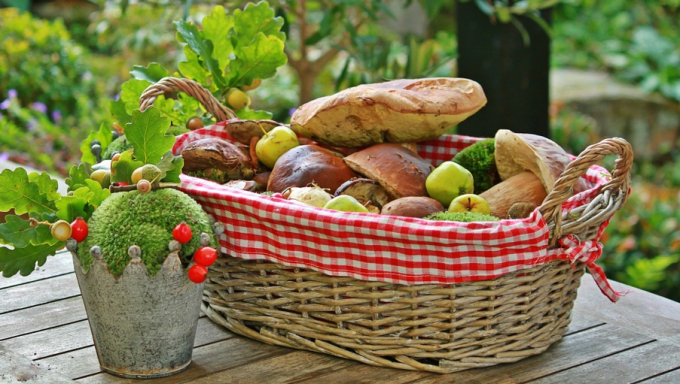 Что нужно брать с собой, когда идешь в лес за грибами и ягодами