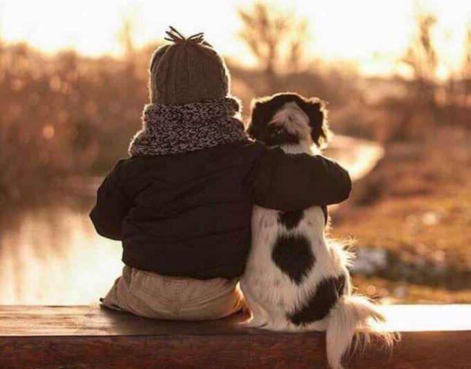 Контакт с щенком: нужен ли и как его развивать?