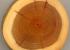 Как определить древесину